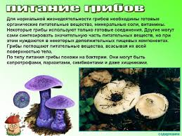 К уроку биологии Общая характеристика грибов класс Июдина Л А  Общая характеристика грибов 6 класс Июдина Л А