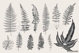 Set Ferns 12 Leaves Vintage Vector Botanical Illustration Black