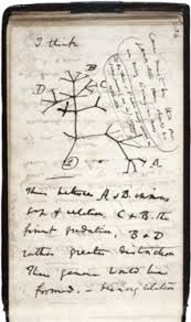 charles darwin  a page of hand written notes a sketch of branching lines