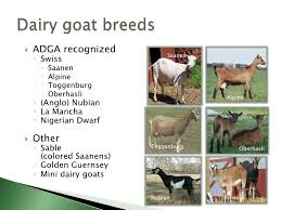 Nubian Goat Color Chart Income Opportunities With Sheep And Goats
