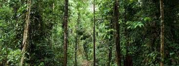 forest conservation essay forest conservation how to save the  forest habitat habitats wwf forest east kalimantan borneo conservation of forest essay