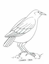 Small Picture Coloring Pictures Of Birds And Insects Animal coloring posted in