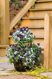 Container Garden Plans Flowers