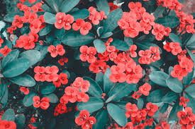 Red Flower Wallpaper 1000 Interesting Red Flowers Photos Pexels Free Stock Photos