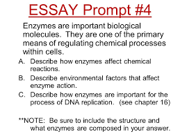 weekly essay prompts fall semester ppt  13 essay