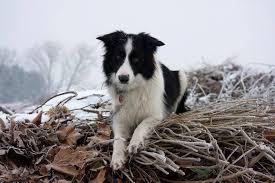 Cluster epilepsie hond