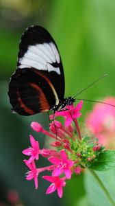 Pretty Butterfly on Pink Flower ...