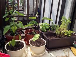grow your own veggies in tokyo ait