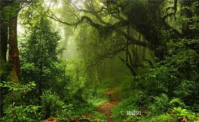 7x5FT Polyester Photo Background Green Jungle Forest Studio Backdrop  Washable LB  eBay