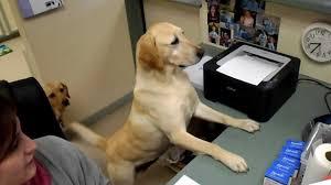 Dog Receipt Dog Gives Receipt Youtube