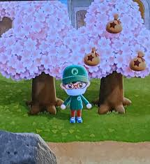 """Polly Barrett🏡 on Twitter: """"Happy Spring from Animal Crossing. Money Trees  with Cherry Blossoms… """""""