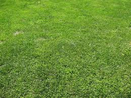 40 Grass Texture With High Res Quality PSDDude