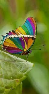 real beautiful colorful butterflies. Delighful Real One Of The Most Beautiful Butterflies And Real Beautiful Colorful Butterflies L