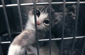 cats in animal shelters. Wonderful Shelters Although Great Progress Has Been Made Fewer Than Half Of The Animals That  Enter Tulsa Animal Welfare Shelter  On Cats In Shelters I
