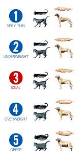 Obesity Is A Problem With Our Pets Reptiles And Amphibians