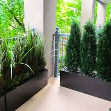 Glamorous Balcony Privacy Plants 89 In Simple Design Decor with Balcony  Privacy Plants