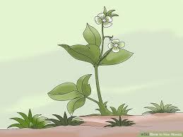 image led hoe weeds step 1