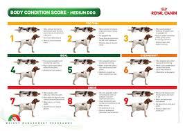 Canine Body Condition Score Diy Dog Treats Medium Dogs Pets