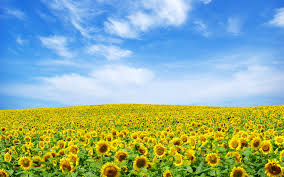 Flower Landscape