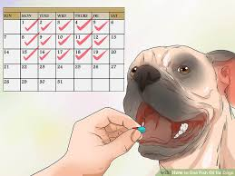 Fish Oil Dosage Chart Dog How To Use Fish Oil For Dogs 7 Steps With Pictures Wikihow