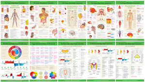 Lifestyle Prescriptions University Advanced Meta Health