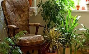 Стайни цветя растат във всеки дом. 12 Stajni Rasteniya S Koito Se Disha Po Lesno