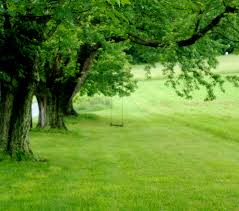Tree Swings Christian Integration Tree Swings
