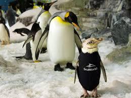featherless penguin. Beautiful Penguin News Inside Featherless Penguin A