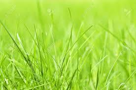 grass blade close up. Natural Background Of Green Grass Blades Close Up Stock Photo - 3571922 Blade