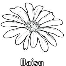 Small Picture How to Draw Daisy Flower Coloring Page How to Draw Daisy Flower