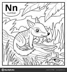 Small Picture Coloring book colorless alphabet Letter N numbat Stock Vector