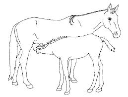 Fries Paard Kleurplaat