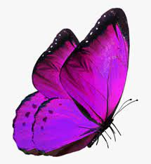 Glowing Butterfly For Editing, HD Png ...