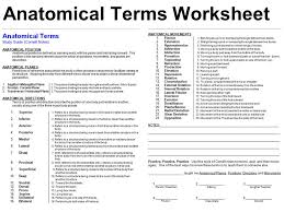 Anatomy And Physiology Directional Terms Quiz - Geoface #91a596e5578e
