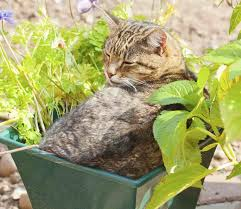 Good Houseplants For Cats