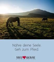Die 94 Besten Bilder Von Pferde Lebensweisheiten In 2019