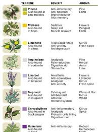 Chart Of Terpenes Esense Lab Creates Medicinal Cannabis By