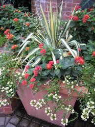 a long season container garden