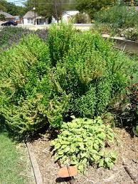 the dig herb garden