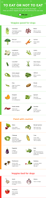 What Can Dogs Eat Chart 26 Vegetables For Dogs To Eat Or Not To Eat Infographic