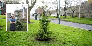 Britainu0027s Worst Christmas Tree Replaced With Equally Bad One Worst Christmas Tree