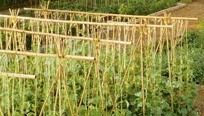 bamboo structures for the garden