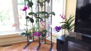 Orchid Display Stands New IKEA orchid stand YouTube 2