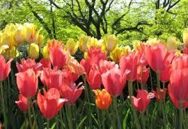 Imagini pentru flori de primavara