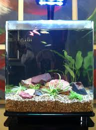 ... Planted 8 gallon tank maintained with Glo fish