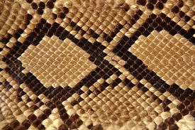 Leopard Print Wallpaper For Bedroom Snakeskin Wallpaper Snakeskin Crocodile And Alligator Skin