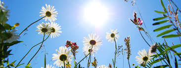 Sun Cover Photo Flowers Sun Garden Facebook Cover Timeline Babbling Panda