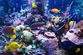 Saltwater Fish Compatibility Chart Saltwater Fish Compatibility Chart The Beginners Reef