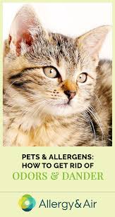 Pets & Allergens: How to Get Rid of Odors and Dander