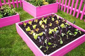 best garden fertilizer. Unique Fertilizer Inside Best Garden Fertilizer